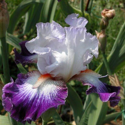 aurelie-cayeux